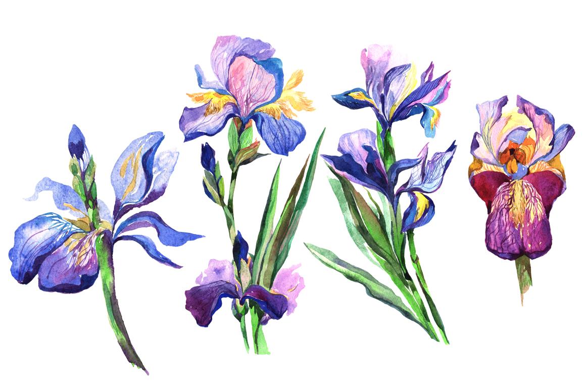 Irises png watercolor flowers set by my design bundles irises png watercolor flowers set example image 2 izmirmasajfo