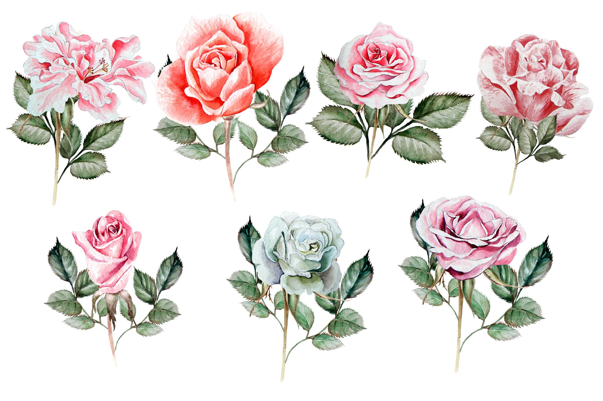 Hand drawn watercolor roses 2 example image 4
