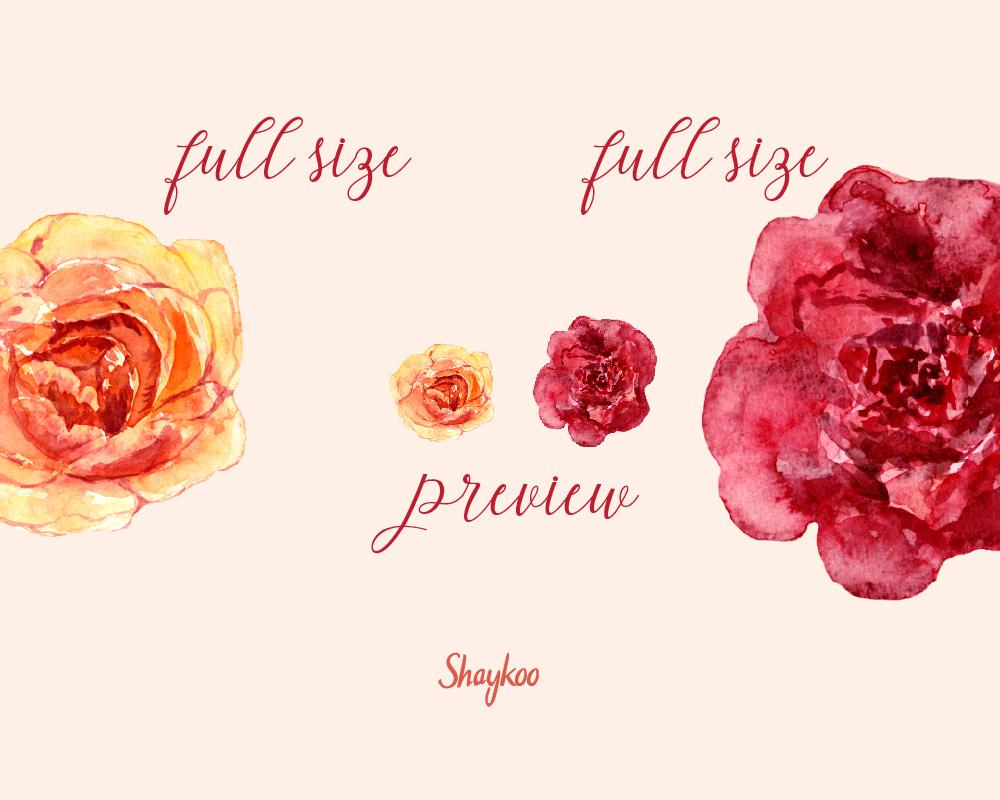 Gold Roses Clipart, Watercolor Flowers | Design Bundles