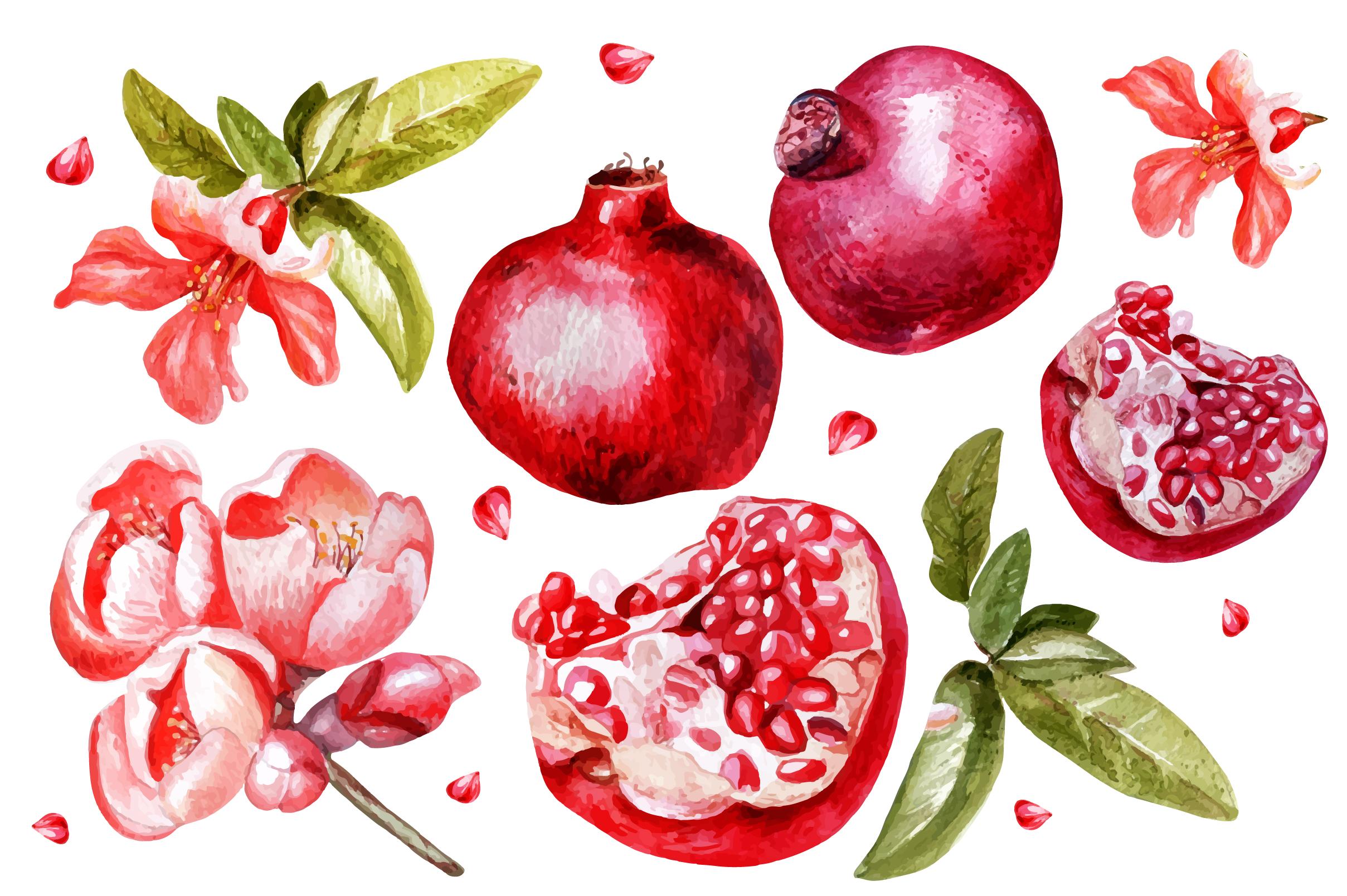Beautiful watercolor pomegranates example image 2