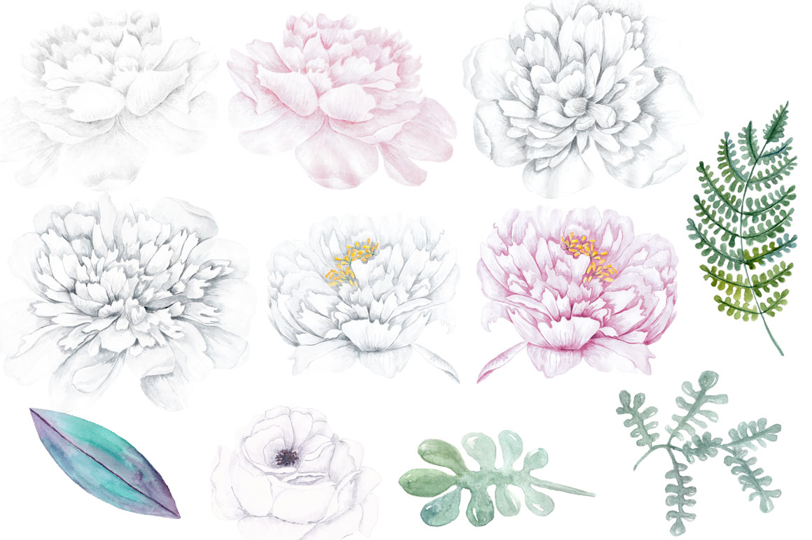 watercolor white peony flowers clipart design bundles rh designbundles net peony flower clip art peony images clip art