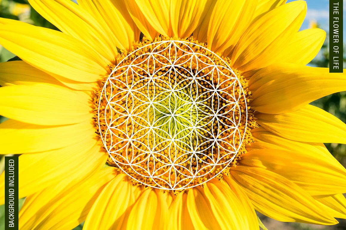 100 Sacred Geometry Symbols  example image 18