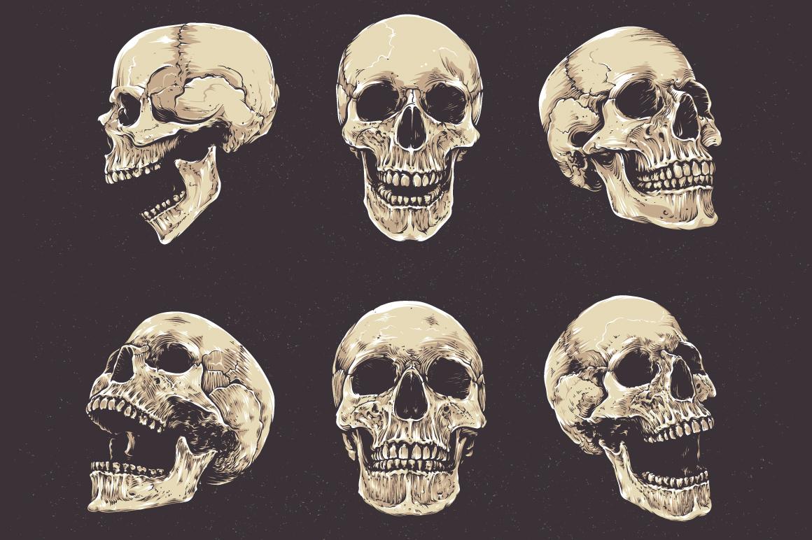 Anatomic Skulls | Vector Pack example image 2
