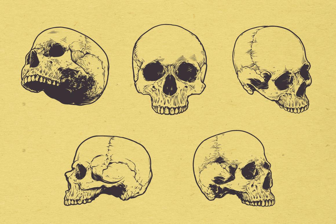 Anatomic Skulls | Vector Pack example image 6