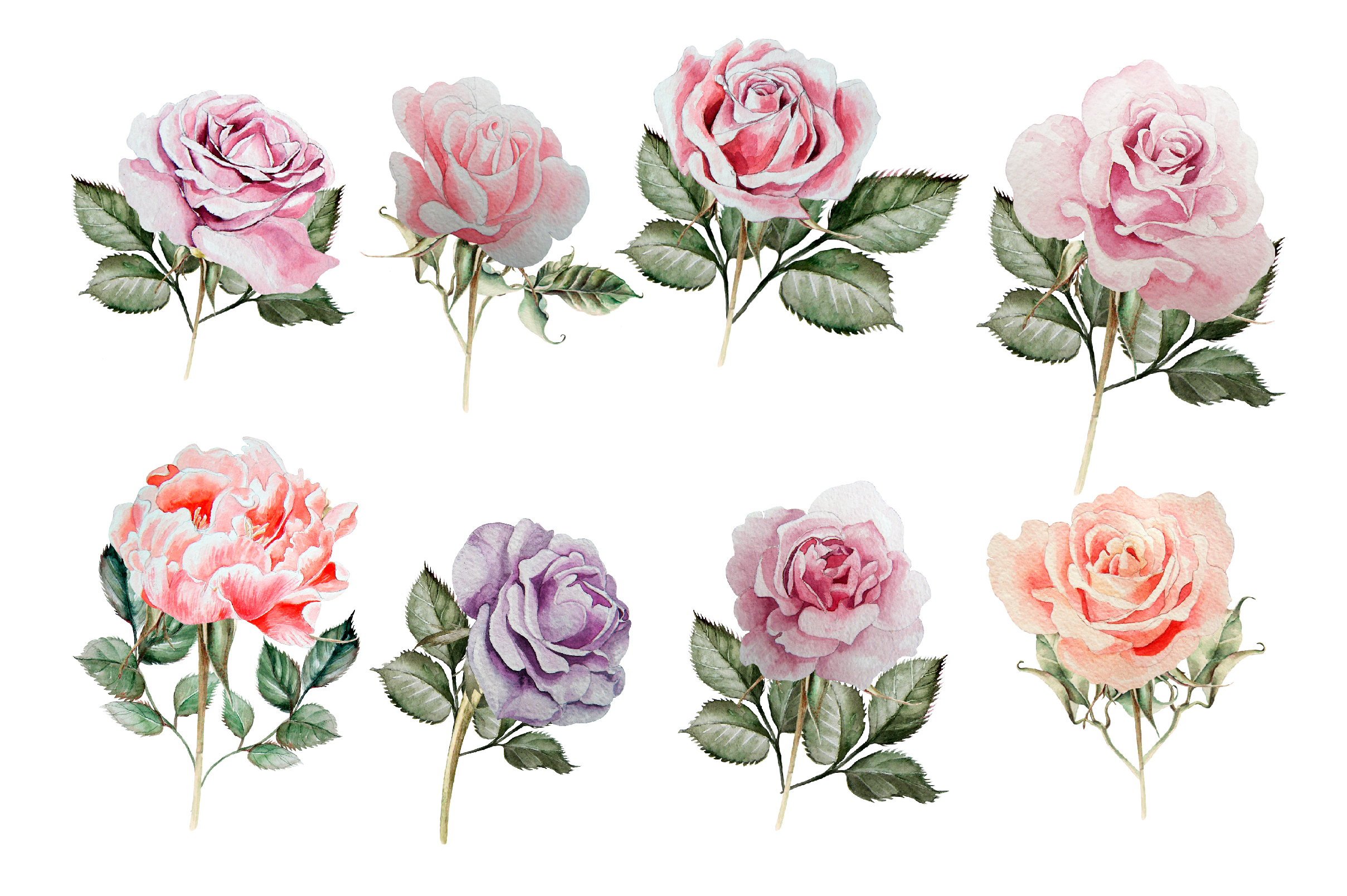 Hand drawn watercolor roses 2 example image 5