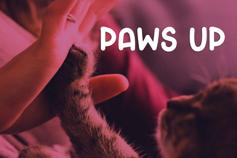 Crafty Cat example image 5