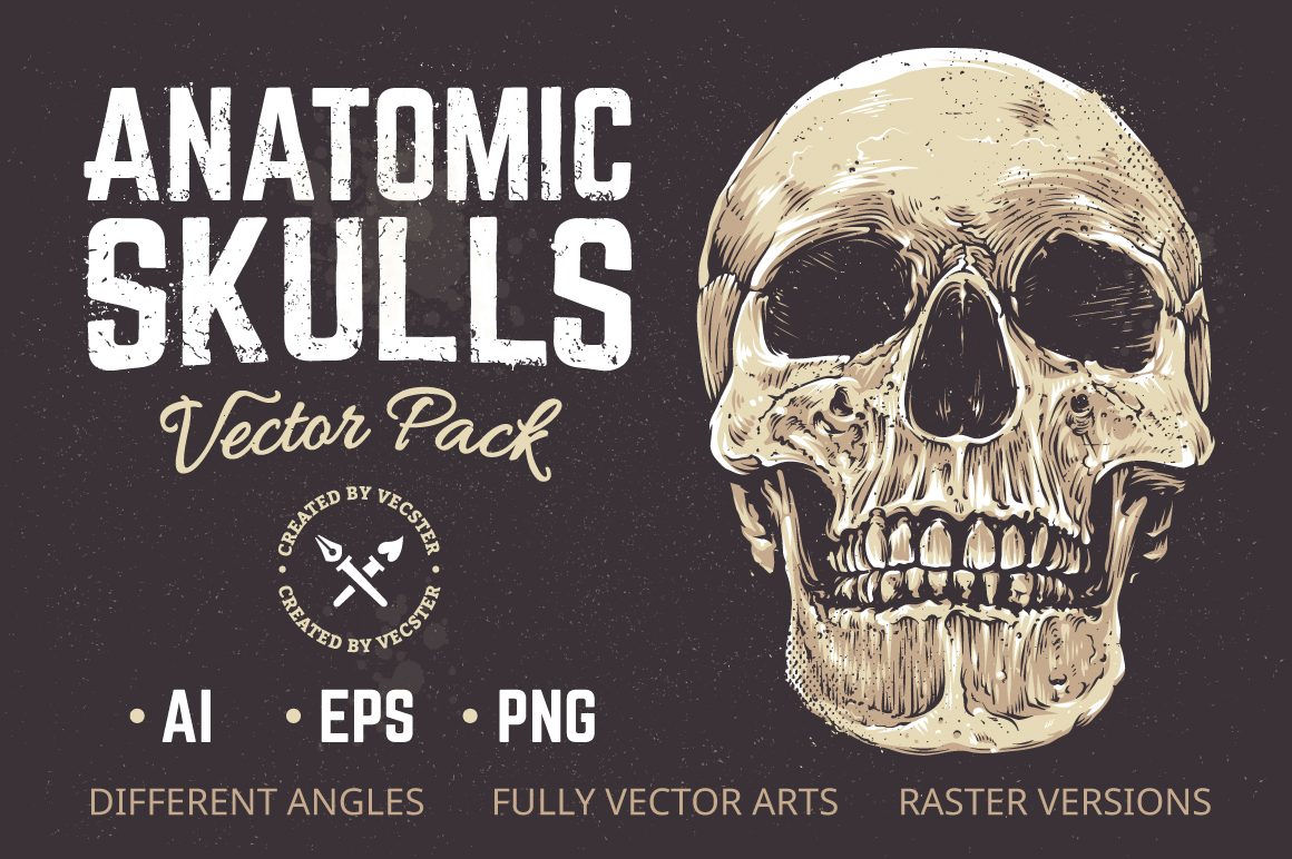 Anatomic Skulls | Vector Pack example image 1
