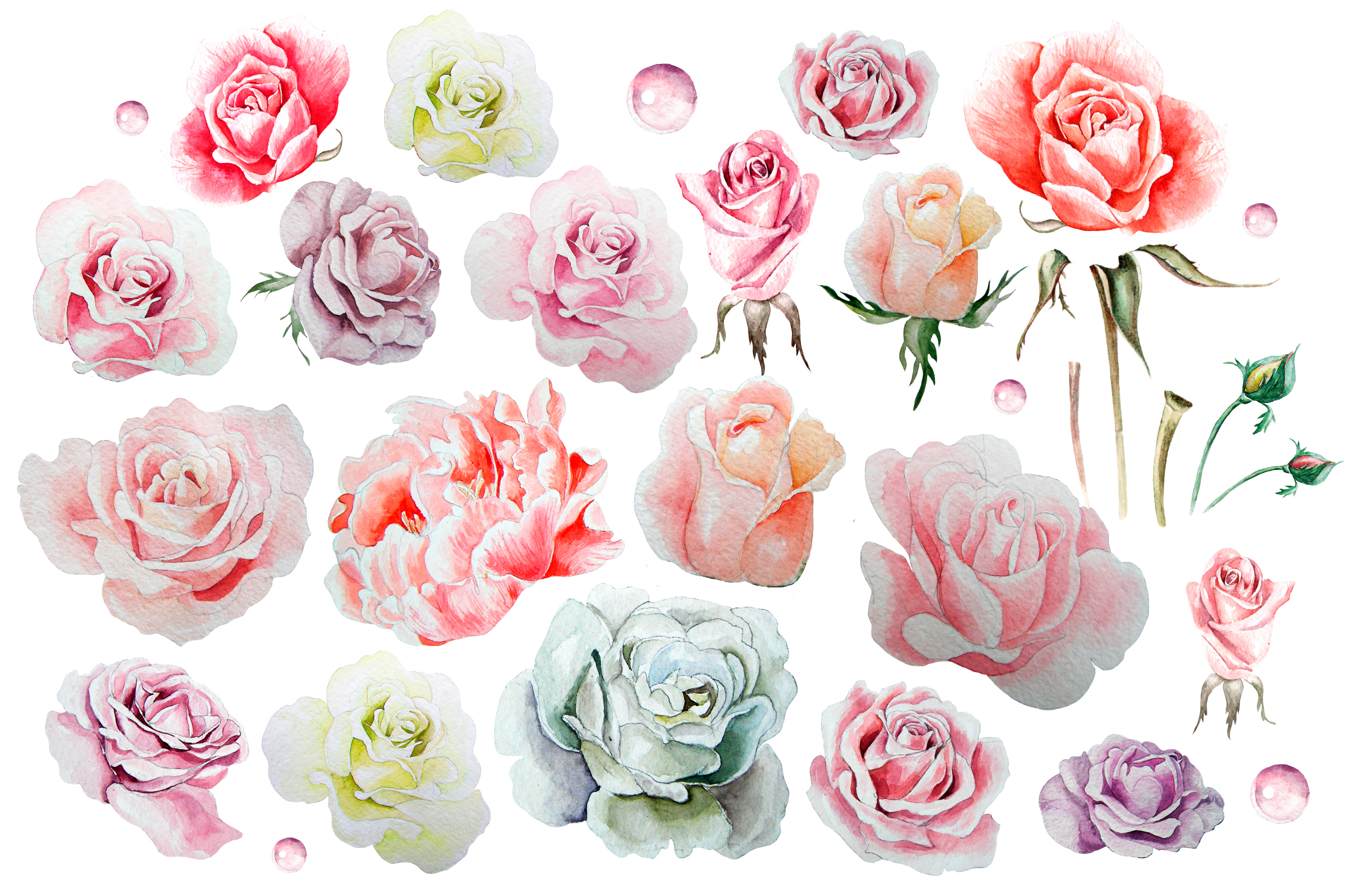 Hand drawn watercolor roses 2 example image 3