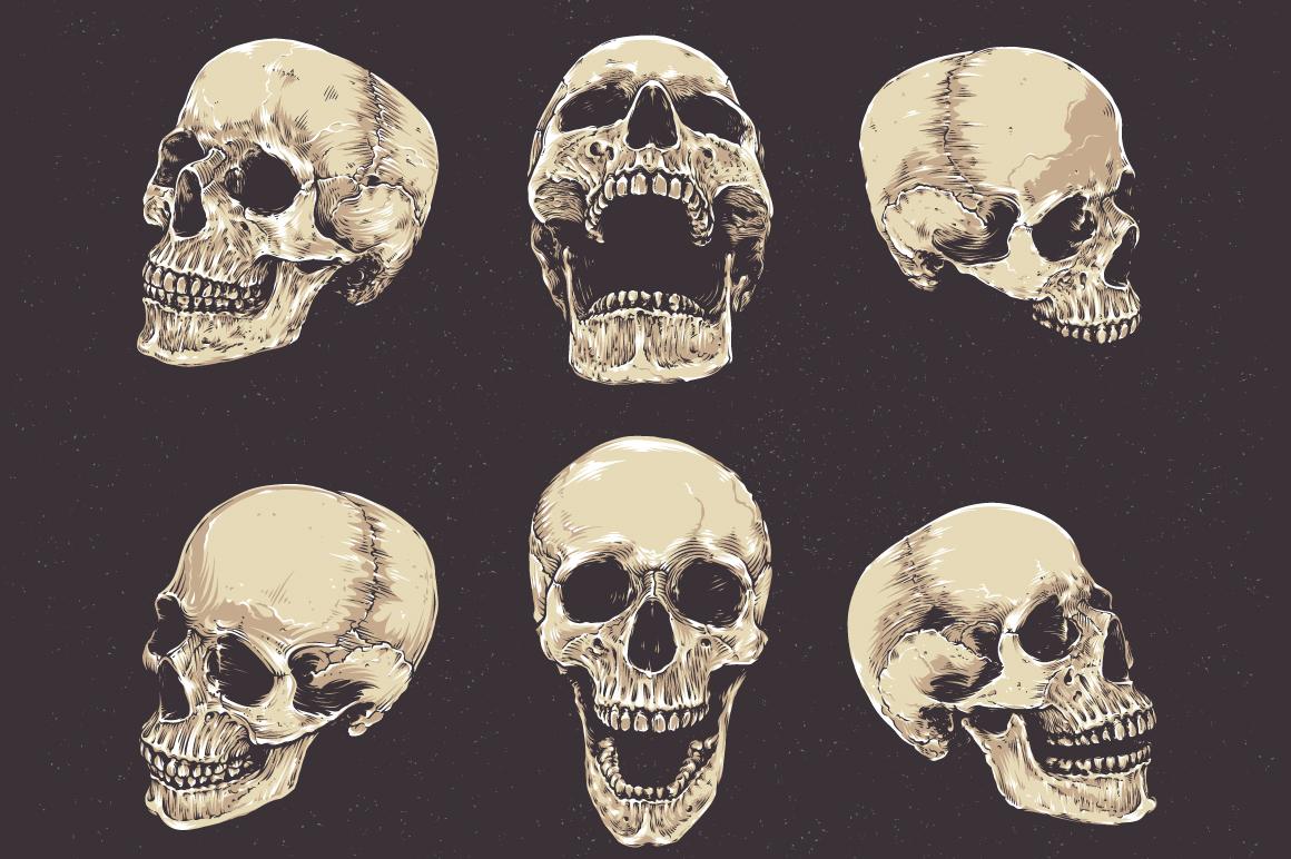 Anatomic Skulls | Vector Pack example image 3