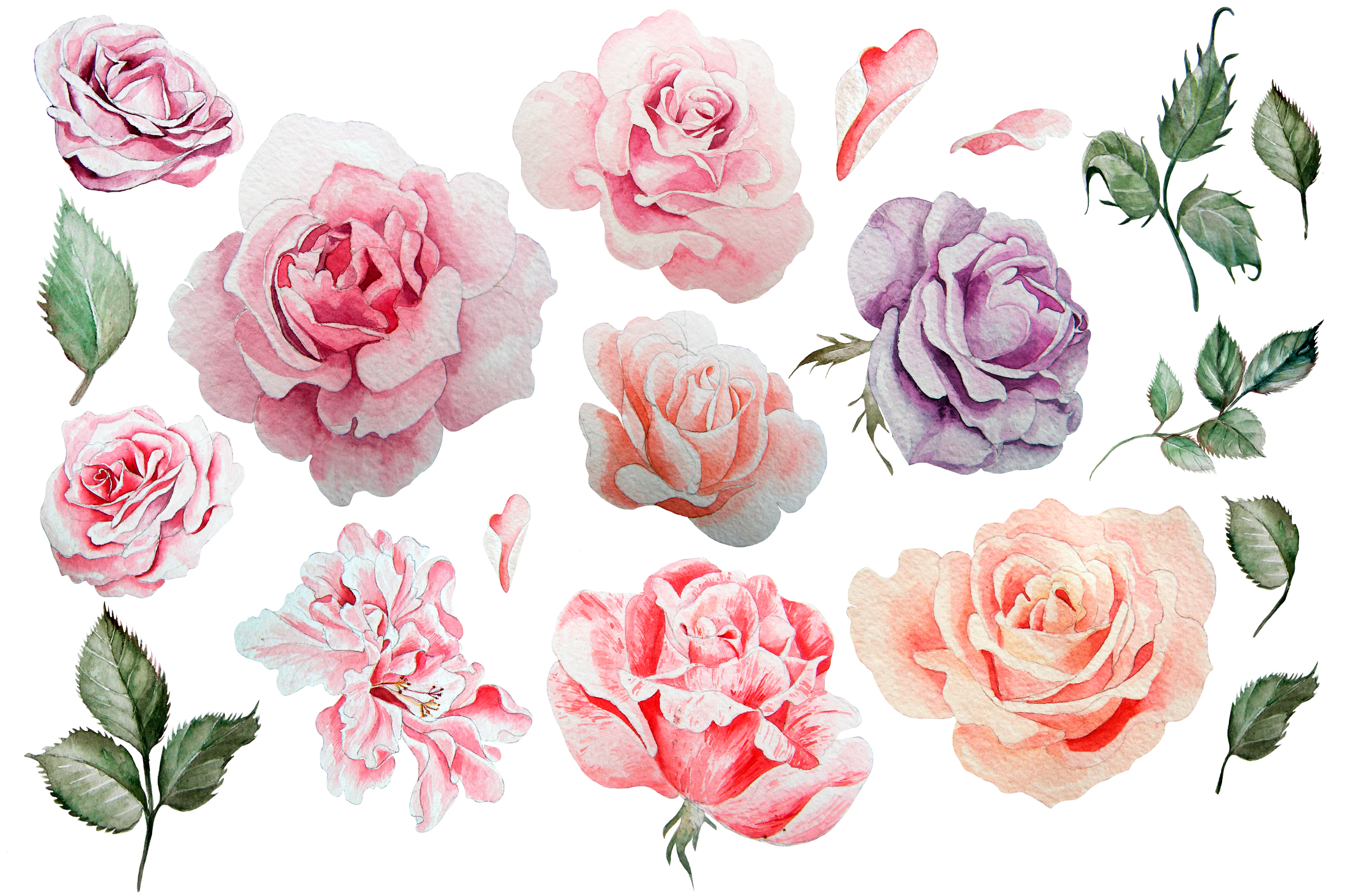 Hand drawn watercolor roses 2 example image 2