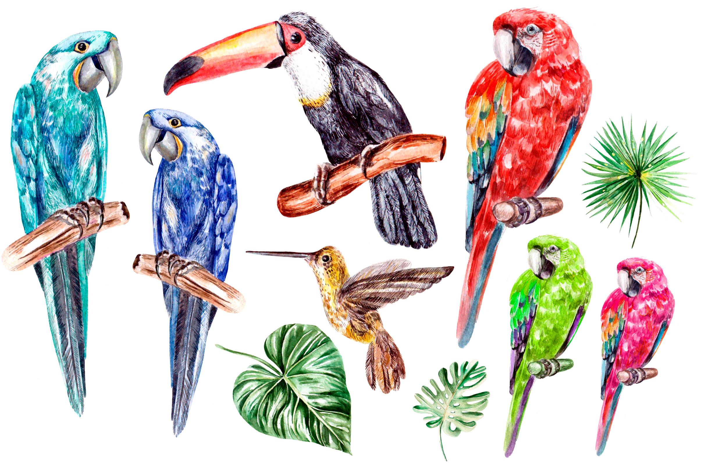 Hand Drawn watercolor TROPICS example image 2