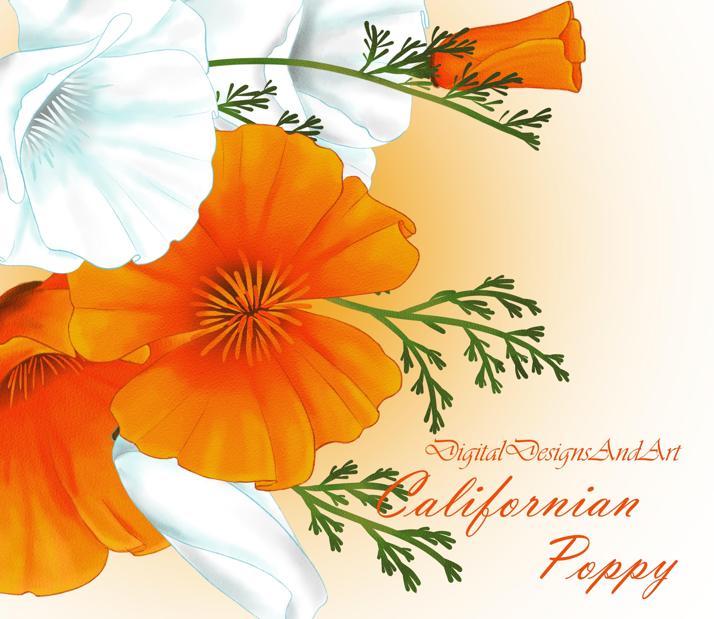 Callifornia Poppy Flowers By Digital De Design Bundles