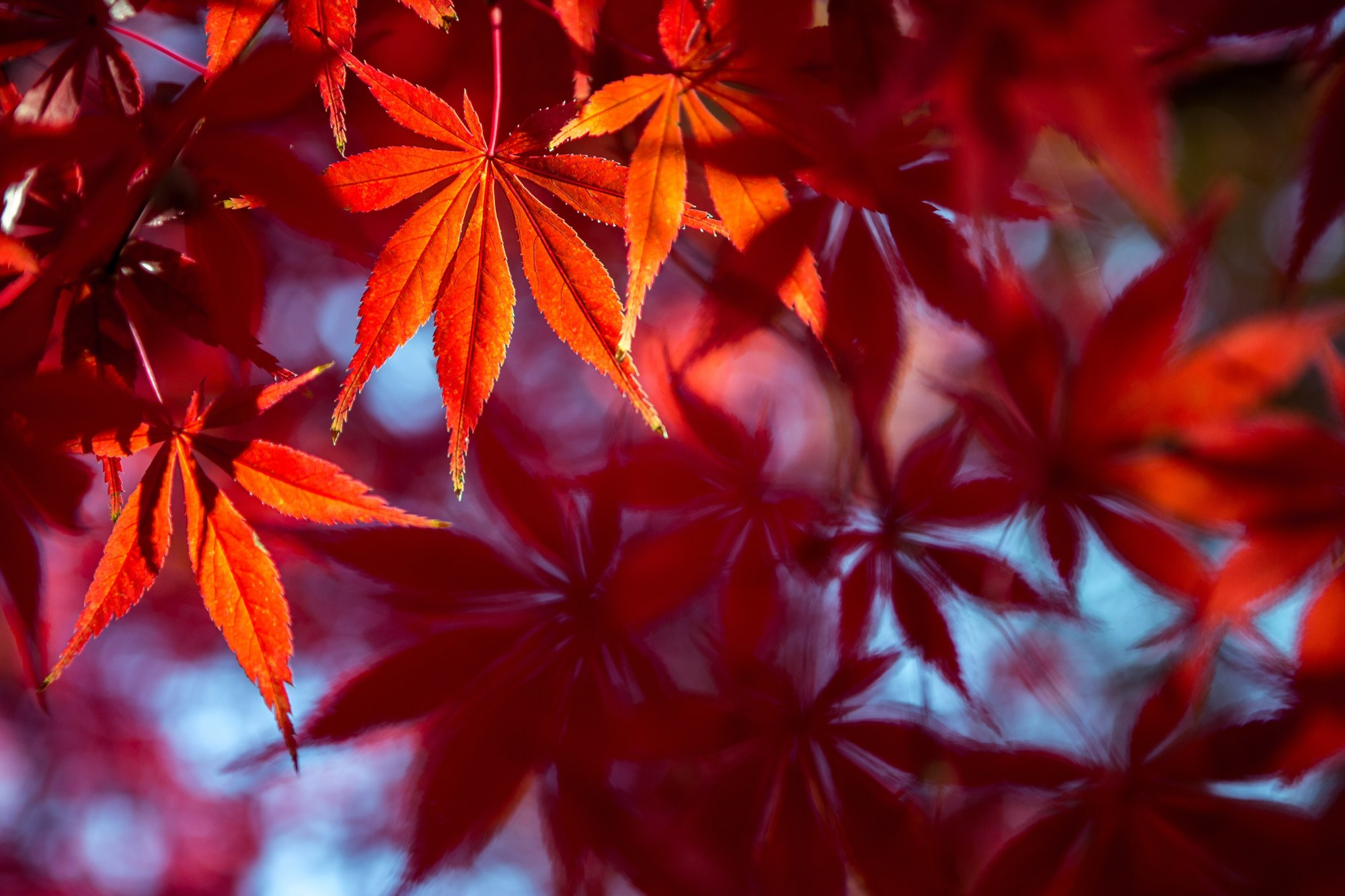 Autumn Leaves #8 example image 1