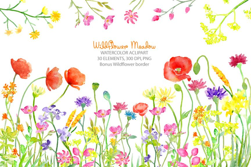 watercolor clipart wildflower meadow w design bundles rh designbundles net wildflower clipart mozilla wildflower clipart free