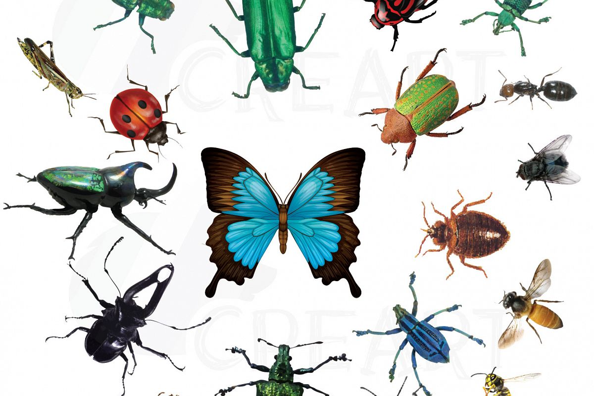 watercolor insects and bugs clipart pac design bundles rh designbundles net bugs clipart black and white bugs clip art images