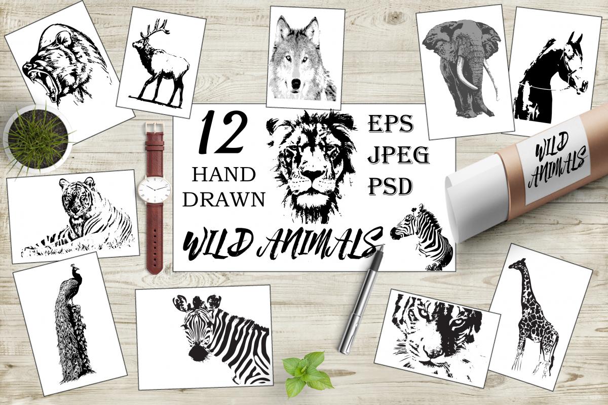 Hand-drawn wild animals example image
