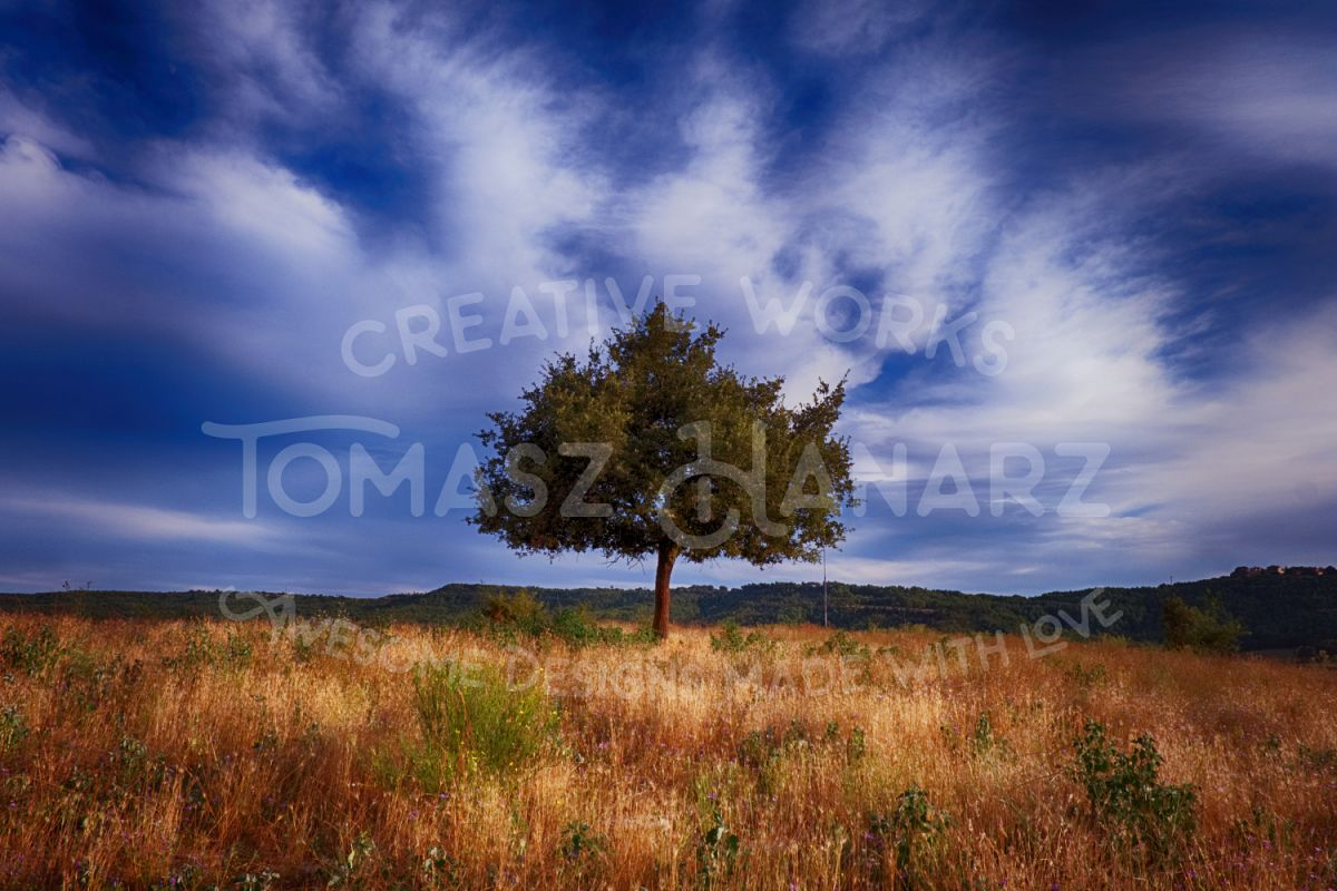 Alone Tree In The Field example image