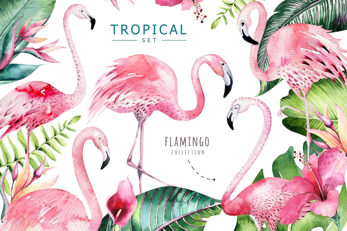 Tropical set II. Flamingo collection example image