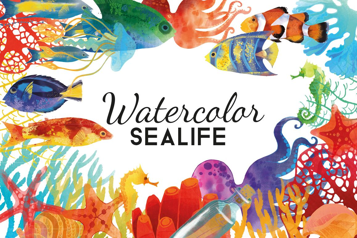 Sea Life example image