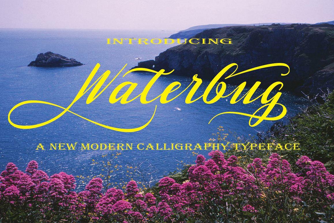Waterbug example image