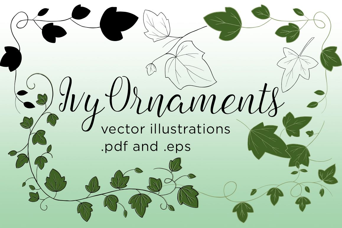 Ivy Vector Illustrations example image