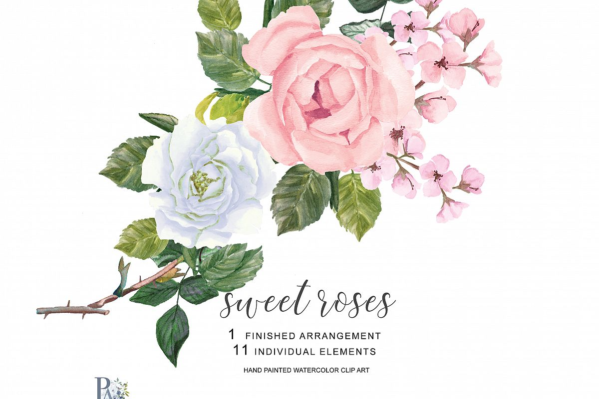 Watercolor Blush Pink And White Roses C Design Bundles