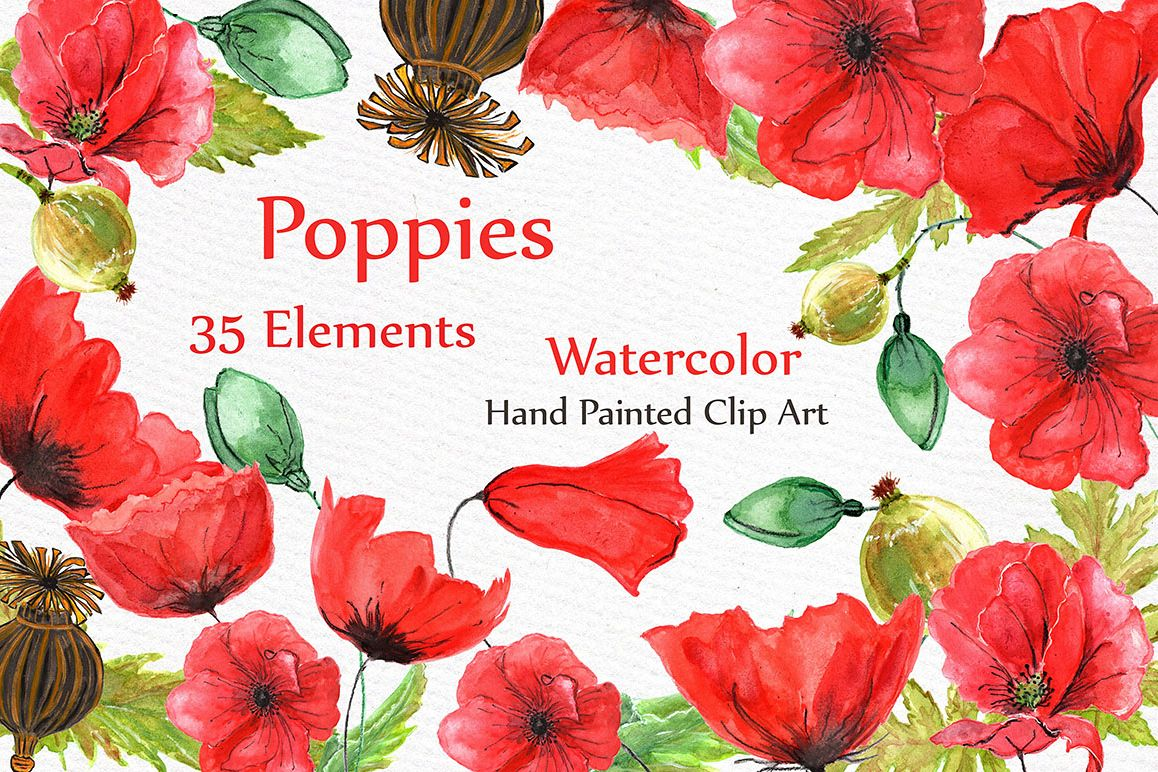 Watercolor flowers- Poppies clipart by | Design Bundles