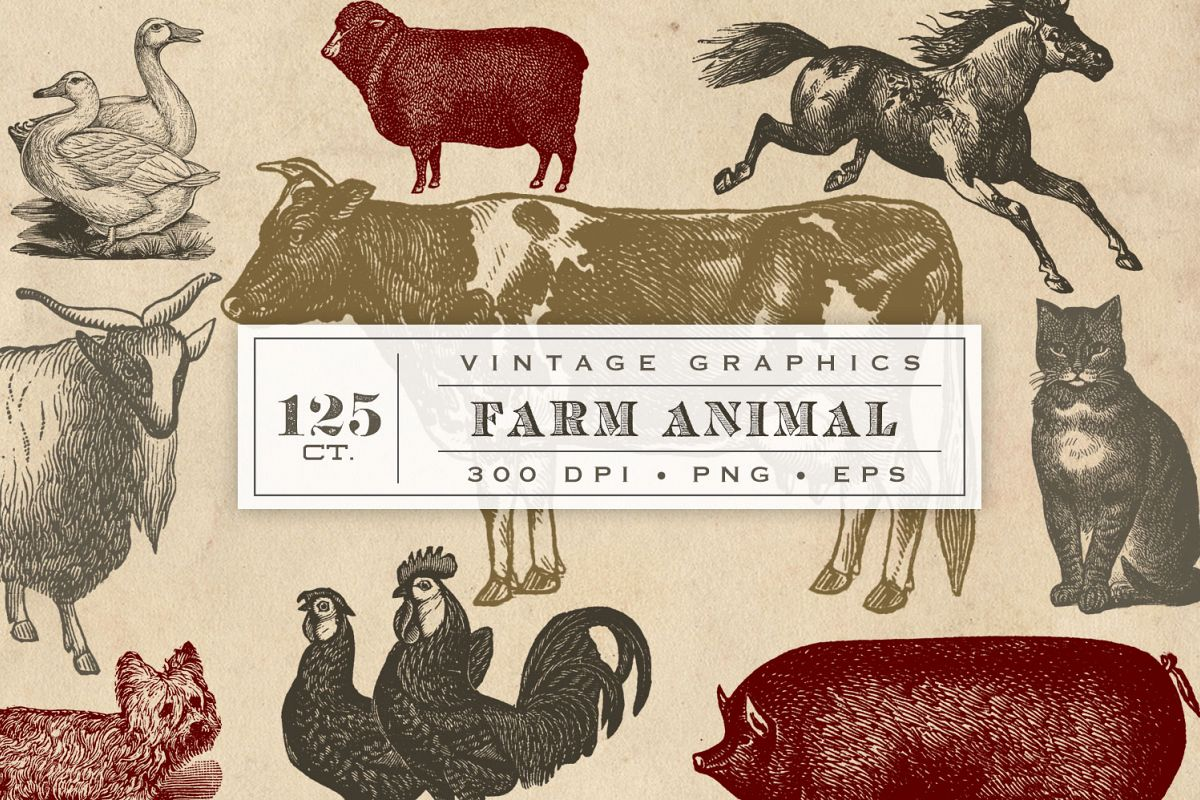 Vintage Farm Animal Vector Graphics Example Image