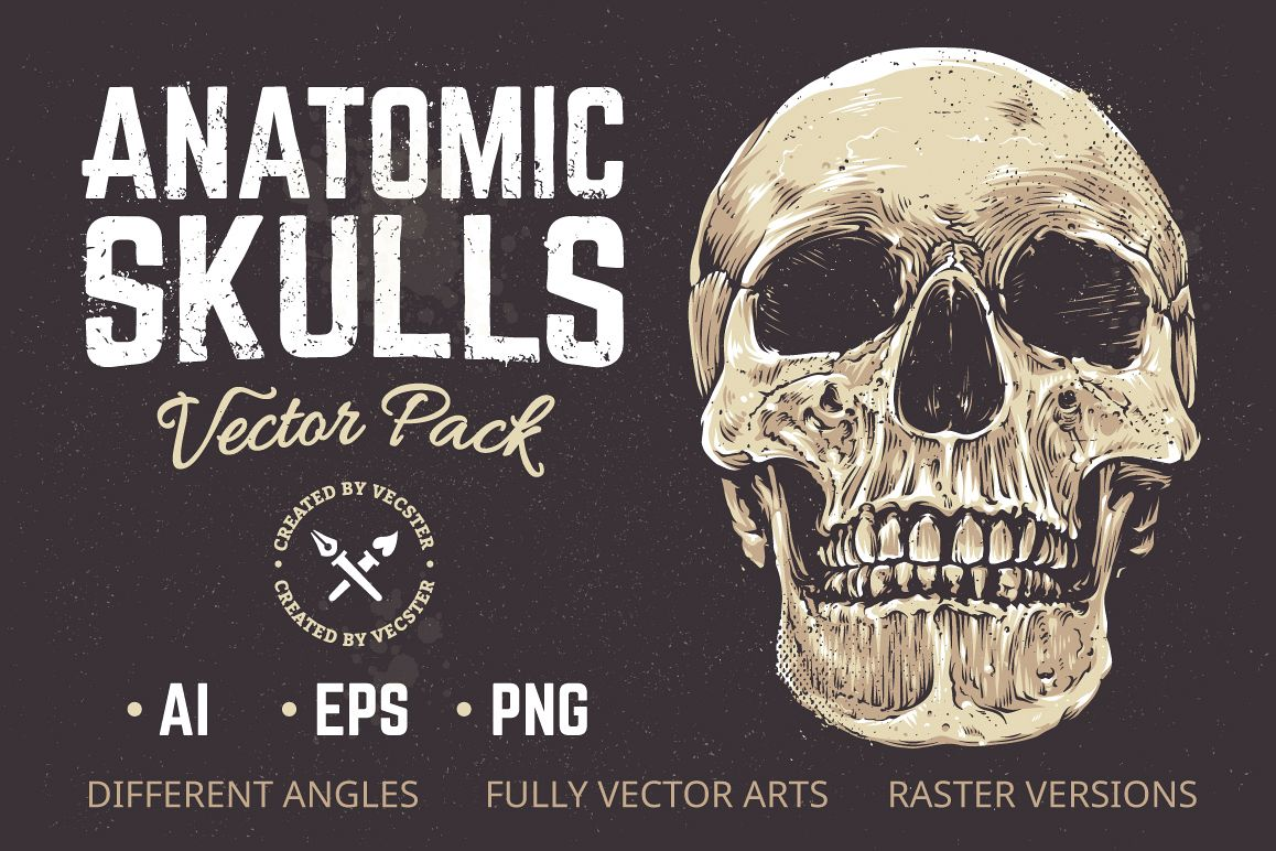 Anatomic Skulls | Vector Pack example image