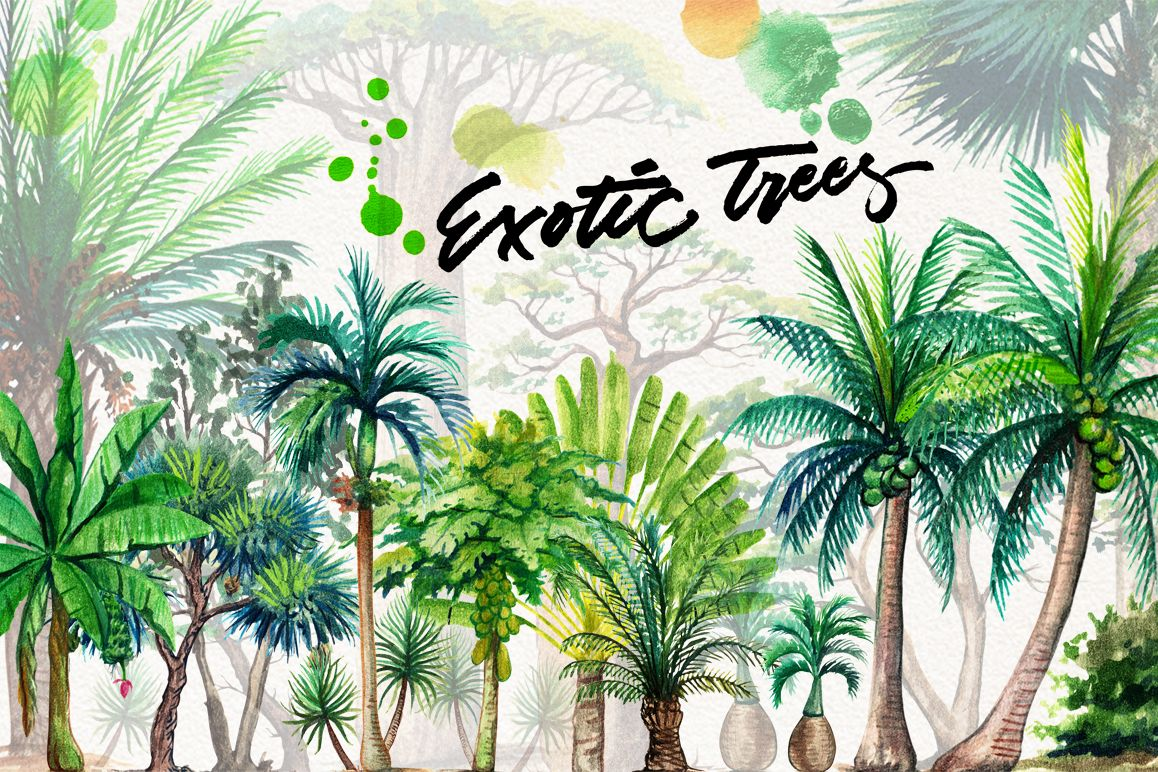 watercolor exotic trees by graphobia | Design Bundles