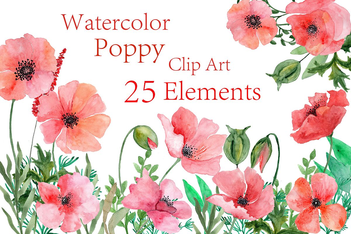 Watercolor Poppy Flowers Clipart By Chi Design Bundles