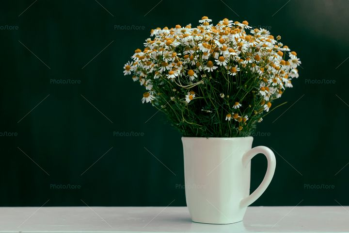 Bouquet of chamomiles in a cup