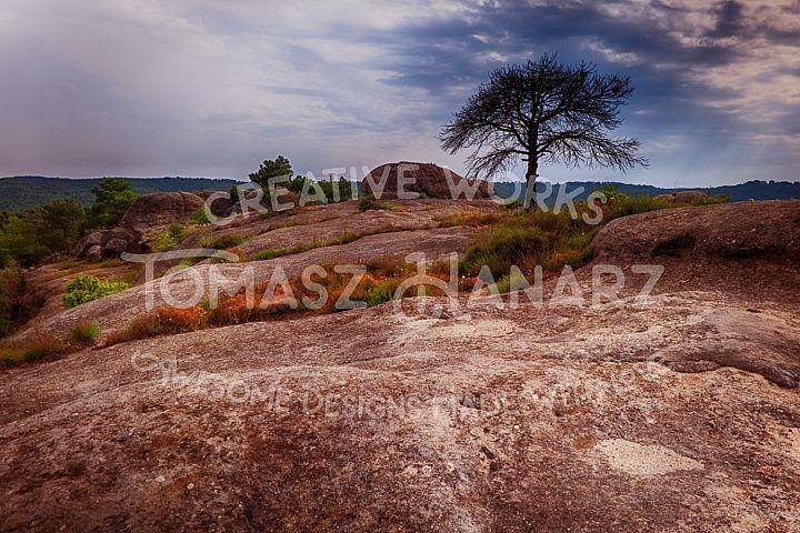 Alone Tree On The Rocky Terrain