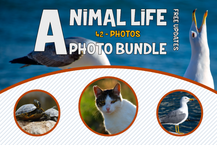 Animals Photo Bundle