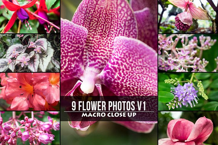 9 Macro Flower Photos