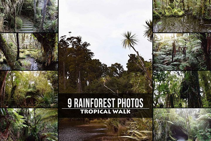 9 Tropical Rainforest Photos