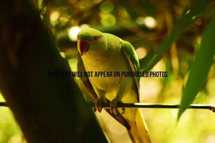 9 Beautiful Birds example 2
