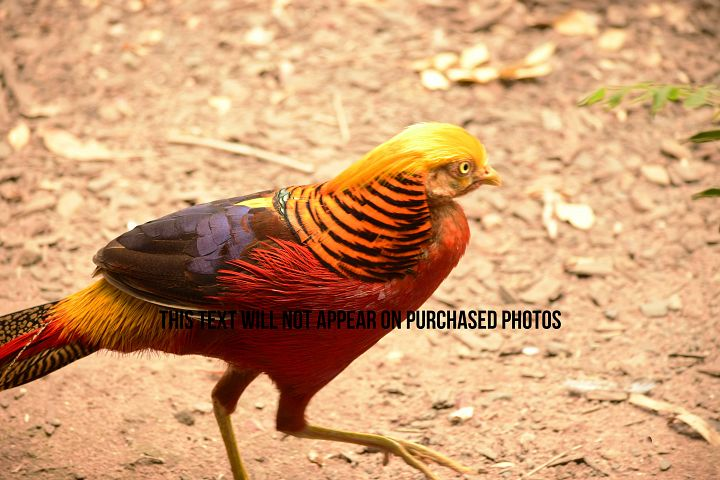 9 Beautiful Birds example 9