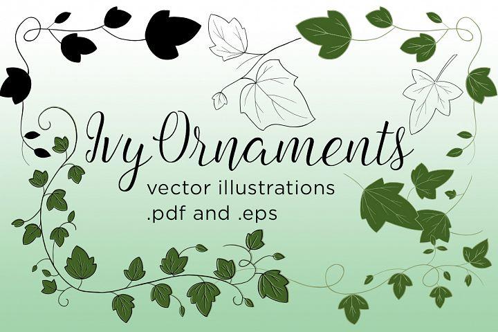 Ivy Vector Illustrations