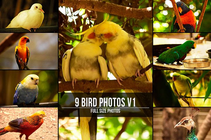 9 Beautiful Birds example 1