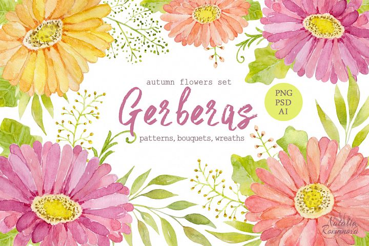 Watercolor set of gerbera flowers