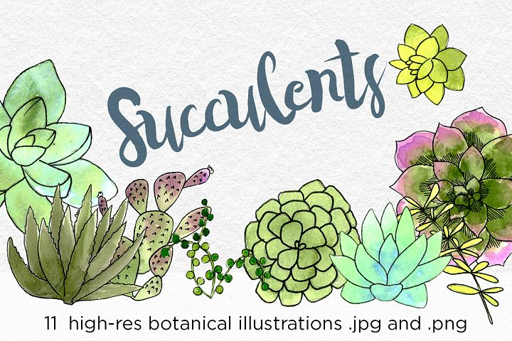 Watercolor Succulents and Cacti Illustrations