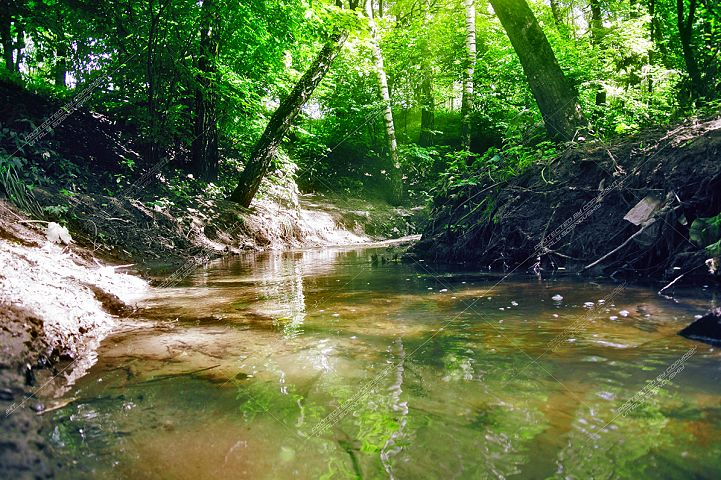 River in the spring forest on a sunny day