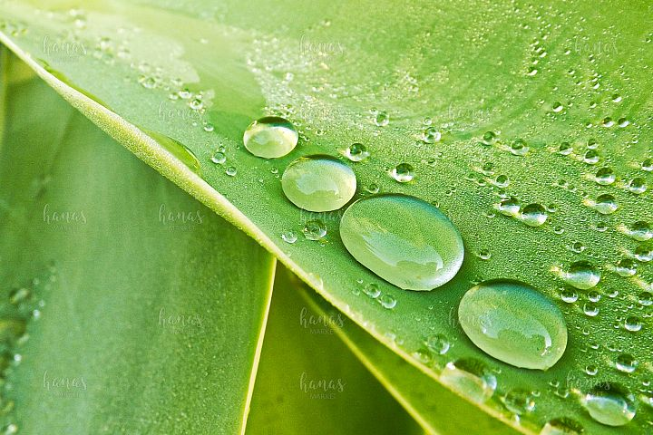 Morning Dewdrops