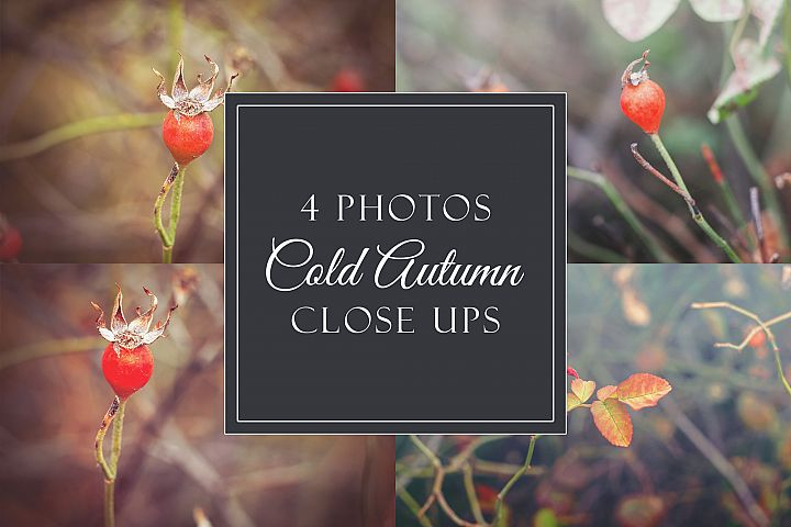 4 cold autumn photos