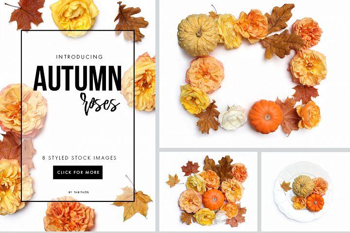 Autumn roses flat lay stock photos