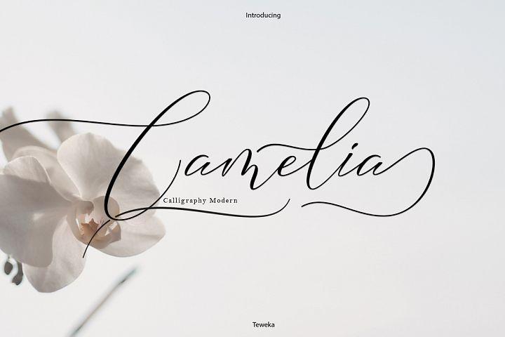 Camelia Calligraphy Modern
