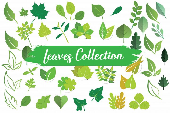 leaves,leaf,branches,tree,plant,leaf elements,leaf clipart,leaves clipart,leaves elements, leaves,autumn leaves,palm tree,palm tree leaves,palm leaves