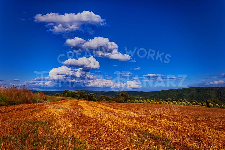 Harvest Field With Cloudy Sky