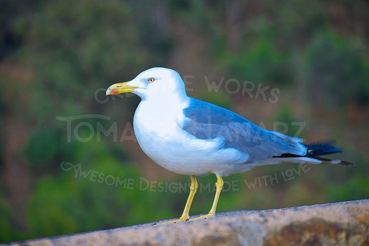 Seagull On The Way Dawn
